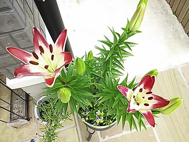 fc2blog_2012060108025902d.jpg