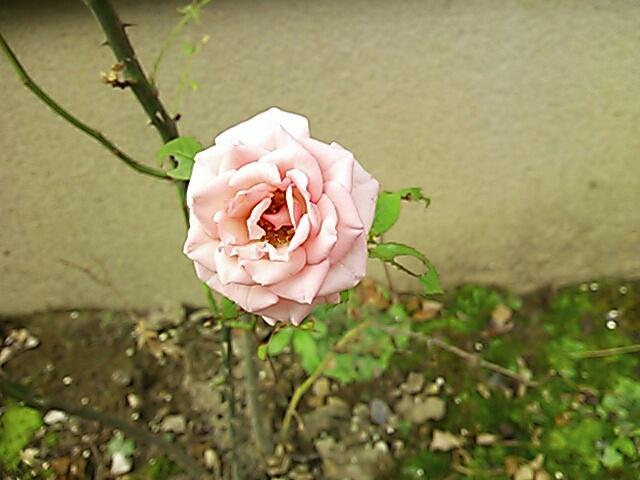 fc2blog_2012060108041661a.jpg
