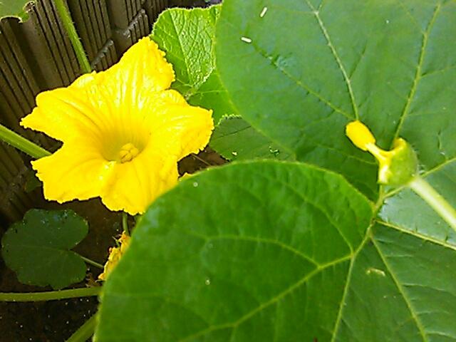 fc2blog_20120604101219a47.jpg