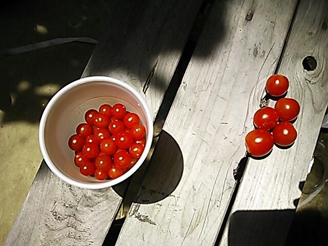 fc2blog_20120803233248ed6.jpg