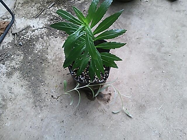 fc2blog_20120804211915e54.jpg