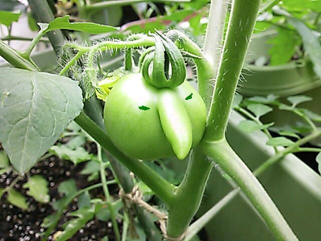 tomato_20120701232927.jpg