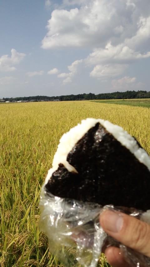 稲刈り2012