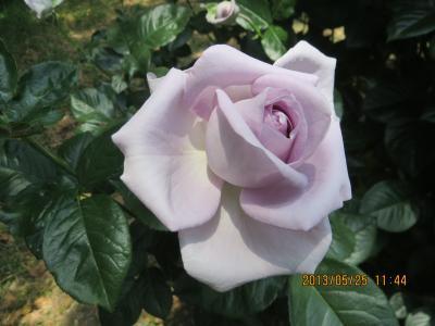 IMG_0944_convert_20130525184255.jpg