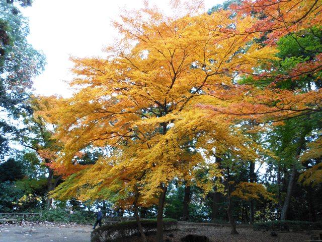 少年の森20121129001