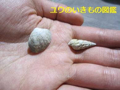 貝がら (1)
