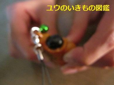 貝がら (2)