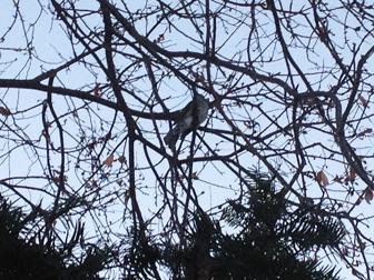 130101枝の鳥さん