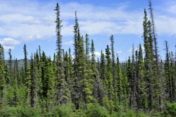 blog 139 Ruby Mountain Range (L) & Kluane Mountains, Spruce, Yukon, Canada_DSC0204-6.24.12 (1)