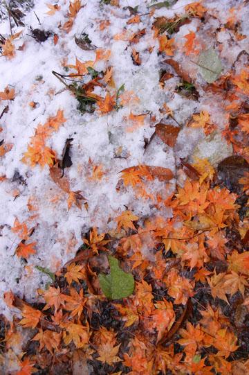 blog Jigokudani, Nagano_DSNC0792-11.16.12