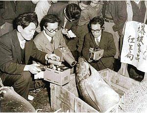 blog 第五福竜丸が水揚げしたマグロの放射能を測定する専門家ら