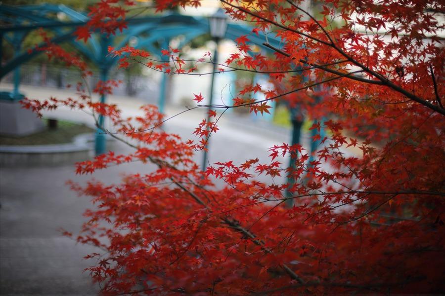 横浜50mm港の見える丘公園紅葉02