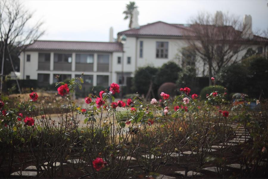 横浜50mm港の見える丘公園英国館バラ01