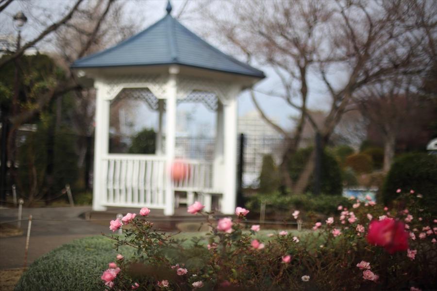 横浜50mm港の見える丘公園庭の家バラ02