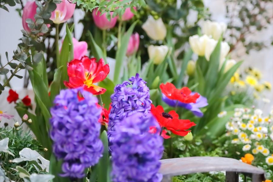 CP2013オリンパス装飾花14