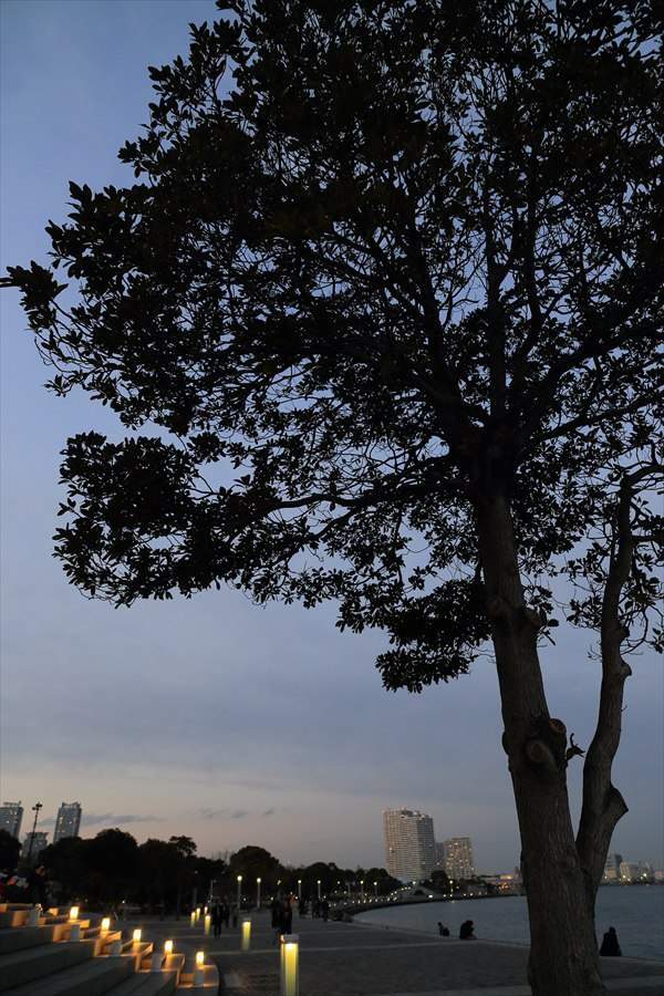 CP2013横浜トワイライト木と海辺夕景04
