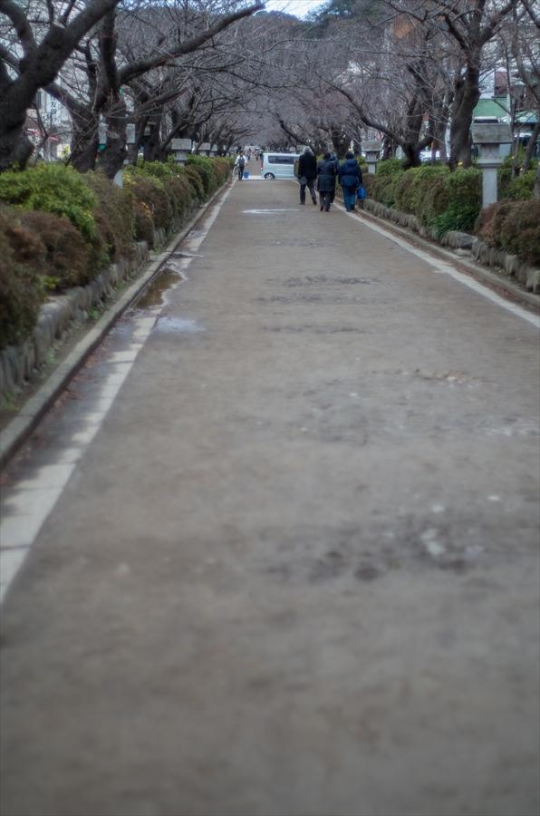 鎌倉スナップ段葛04