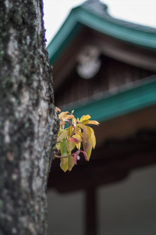 鎌倉スナップ寄木08