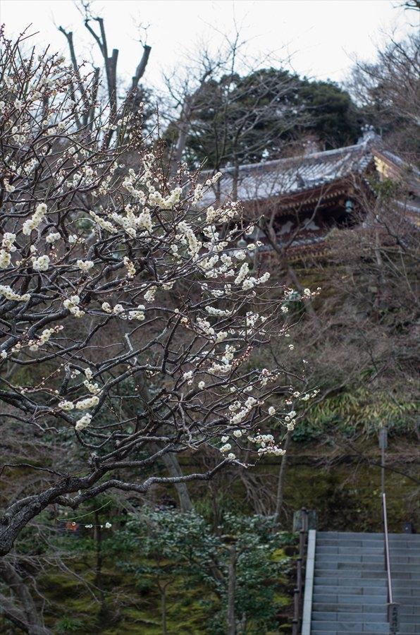 長谷寺その1庭園10