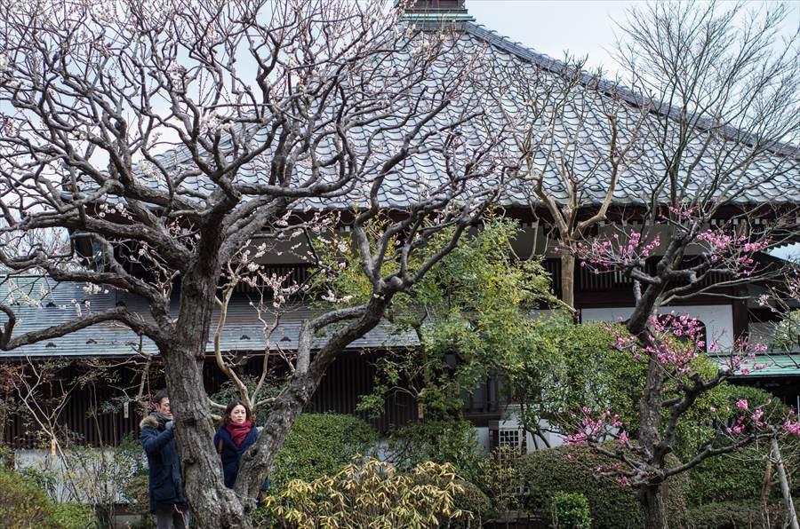 長谷寺その1庭園11