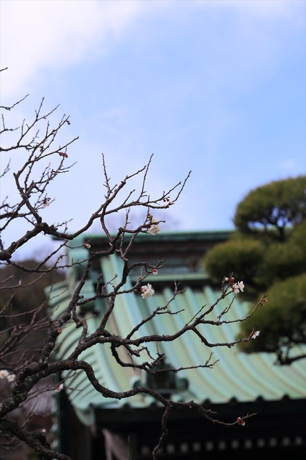 長谷寺その1庭園梅と山門06