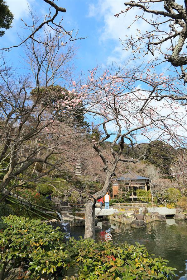 長谷寺その2庭園紅梅11