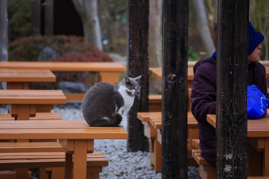 長谷寺その1院内猫と人18