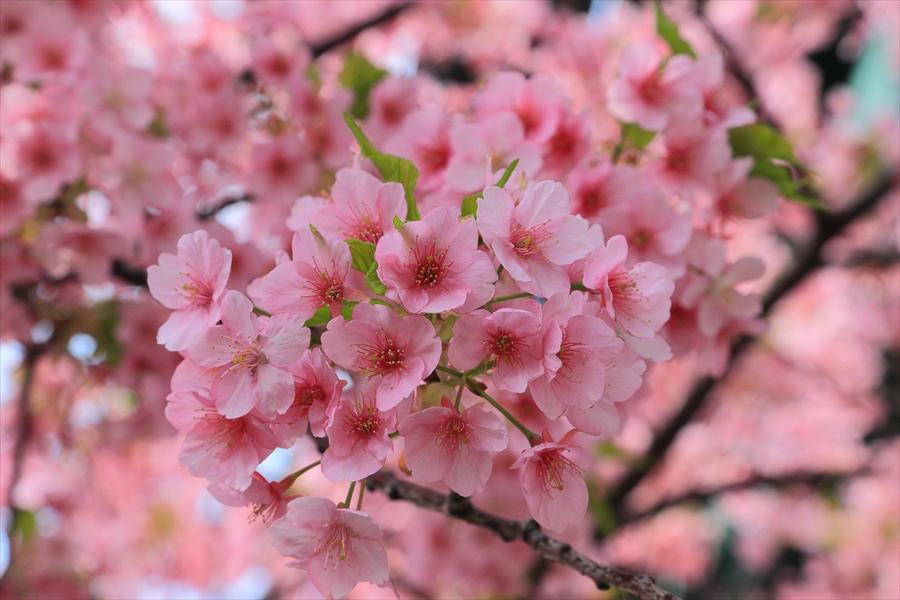 三浦桜07