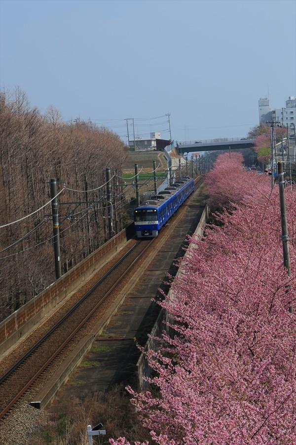 三浦京急桜ブルー07
