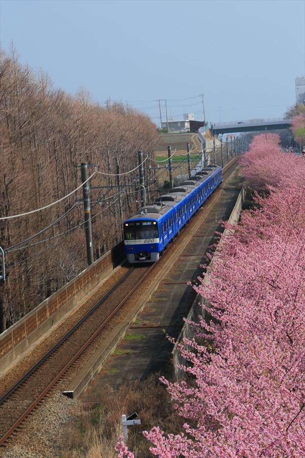 三浦京急桜ブルー08