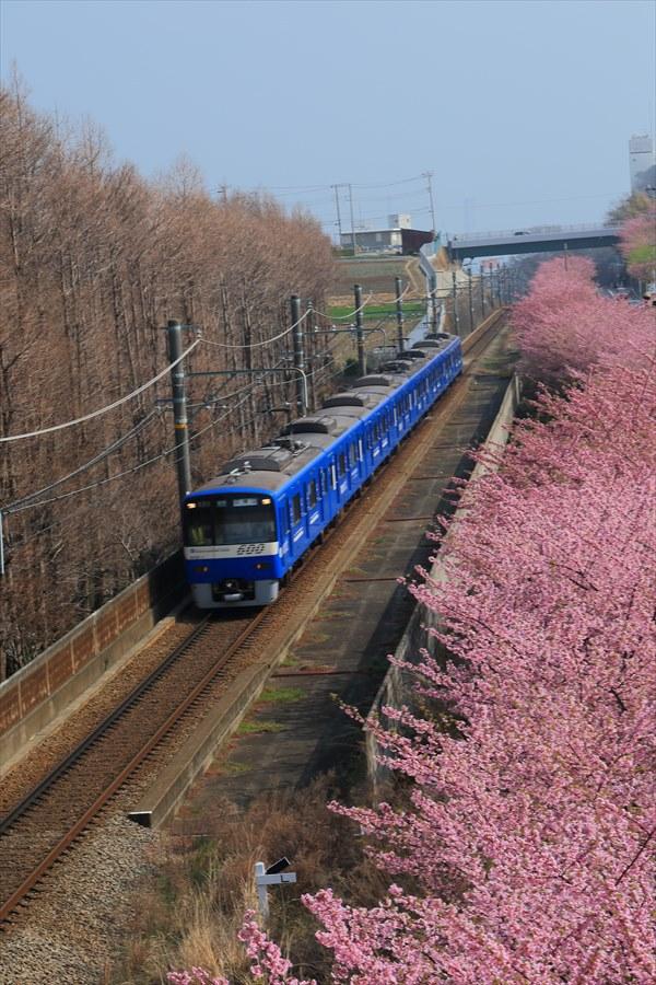 三浦京急桜ブルー09