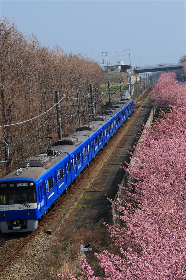 三浦京急桜ブルー01