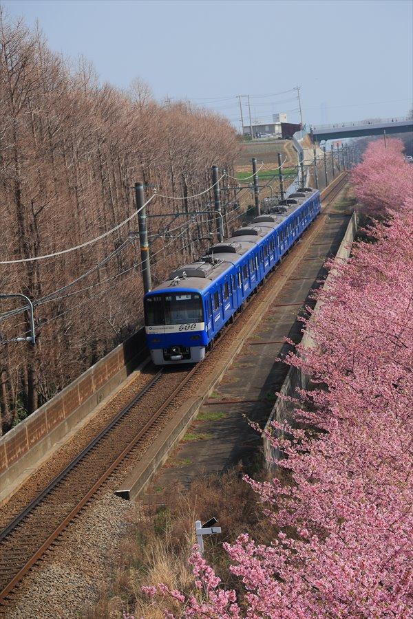 三浦京急桜ブルー02