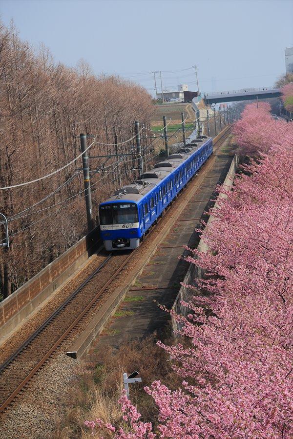 三浦京急桜ブルー10