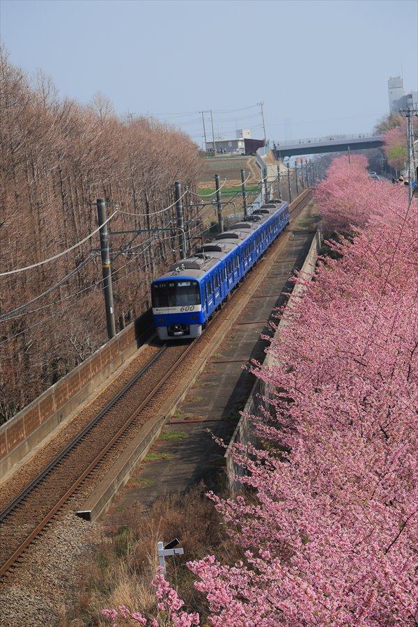 三浦京急桜ブルー03