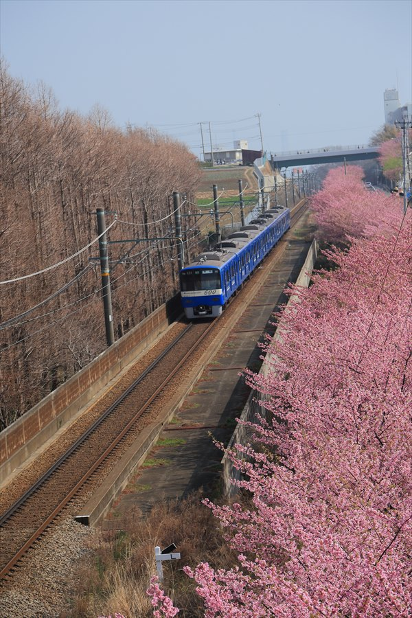 三浦京急桜ブルー04