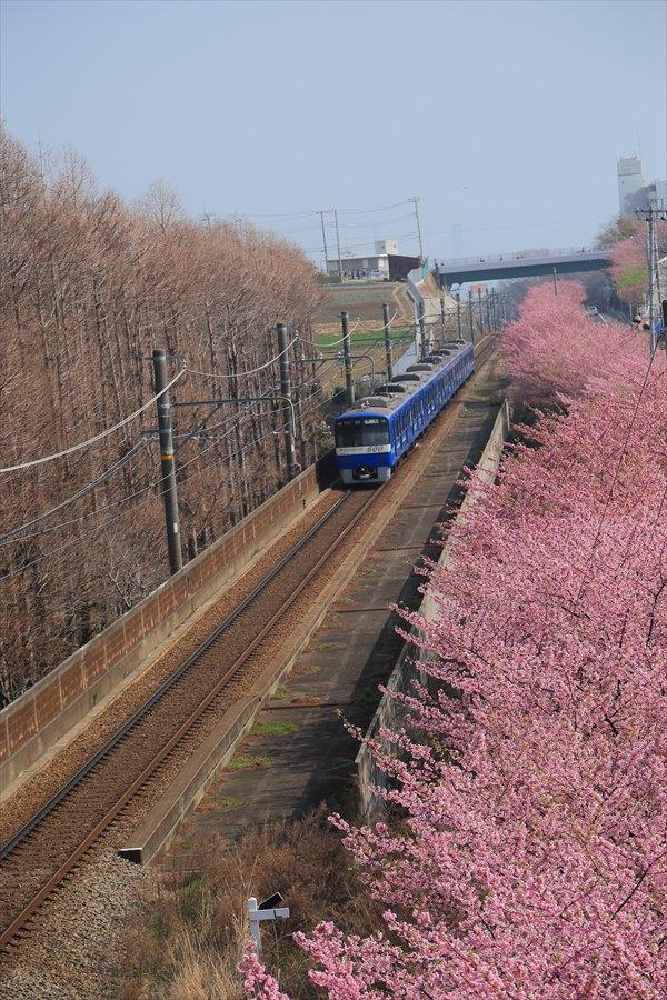 三浦京急桜ブルー05
