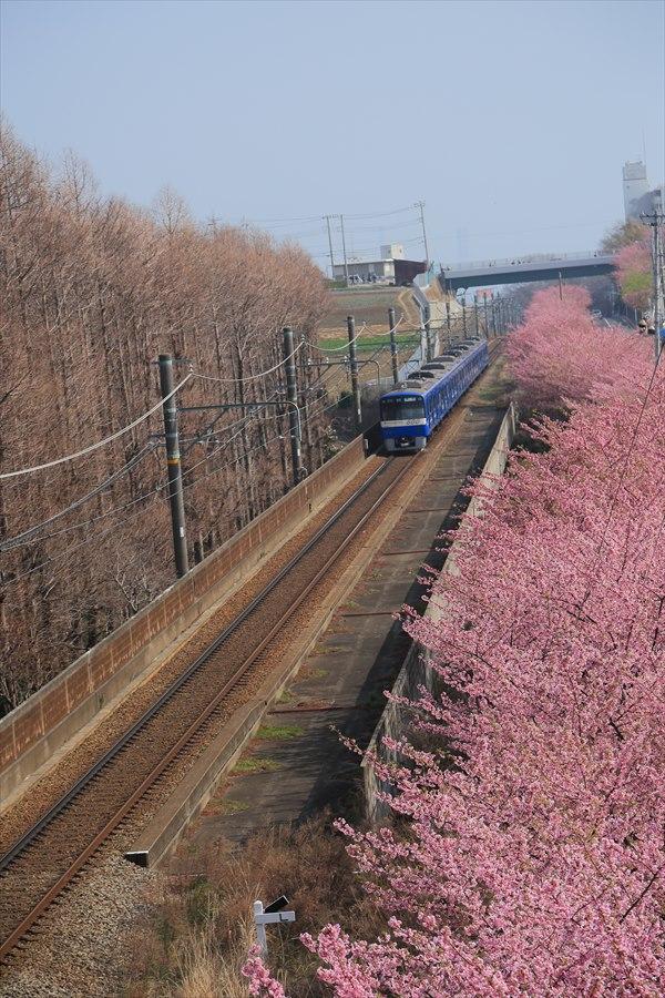 三浦京急桜ブルー06