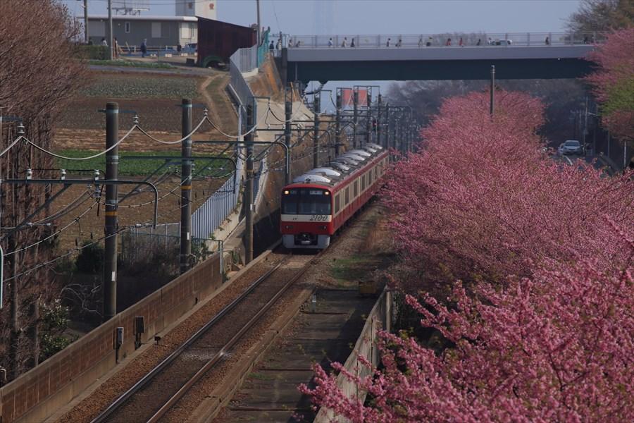 三浦京急桜上から01