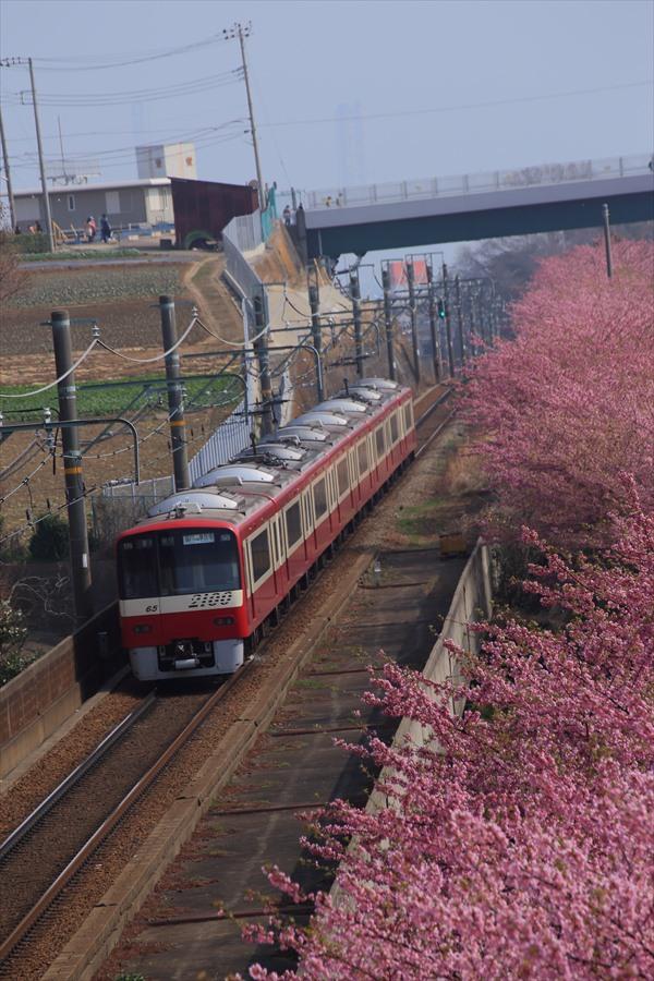三浦京急桜上から04
