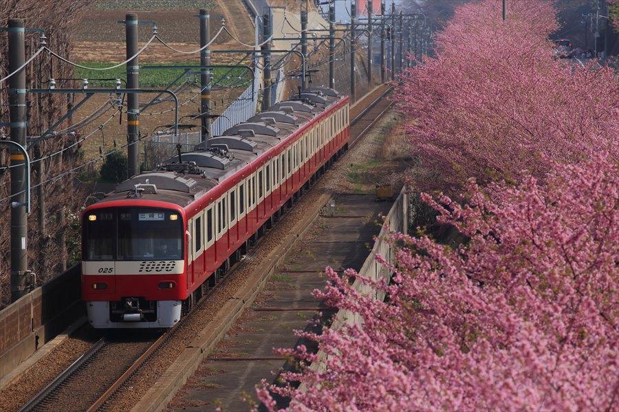 三浦京急桜上から05
