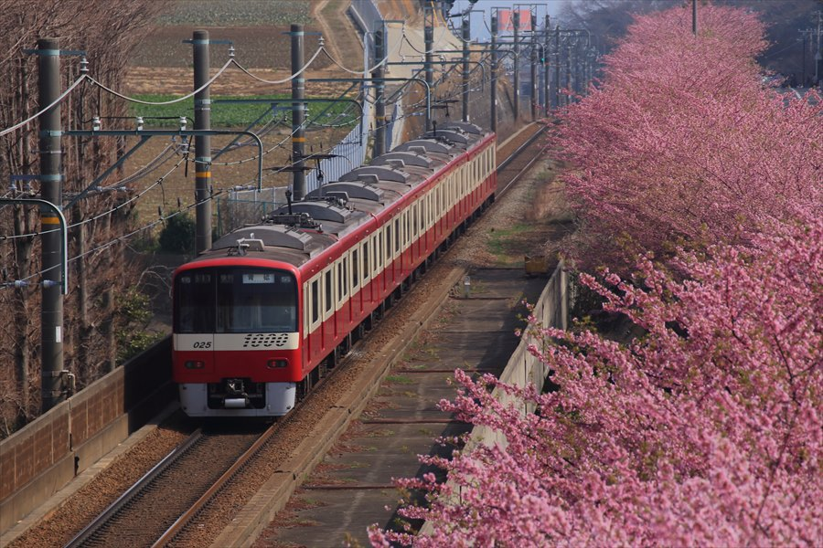三浦京急桜上から06