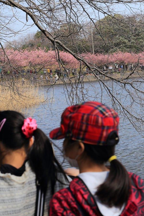 三浦河津桜ひととき子供二人池12