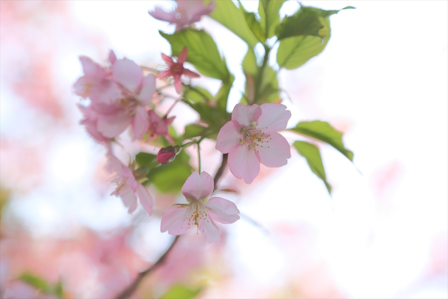 三浦桜14