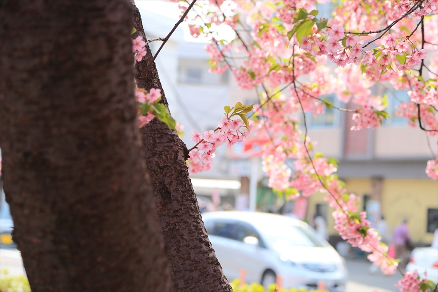 三浦桜16