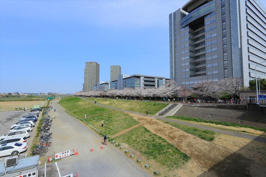 2013多摩川桜その208