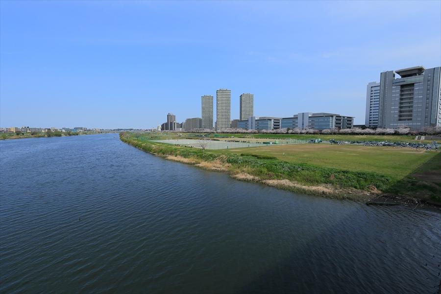 2013多摩川桜その209