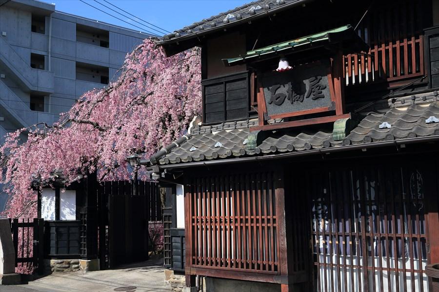 仙台石橋屋しだれ桜01