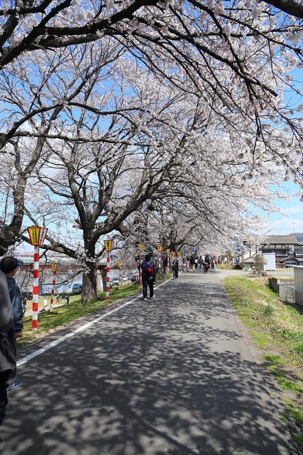 白石川千本桜その1遊歩道04