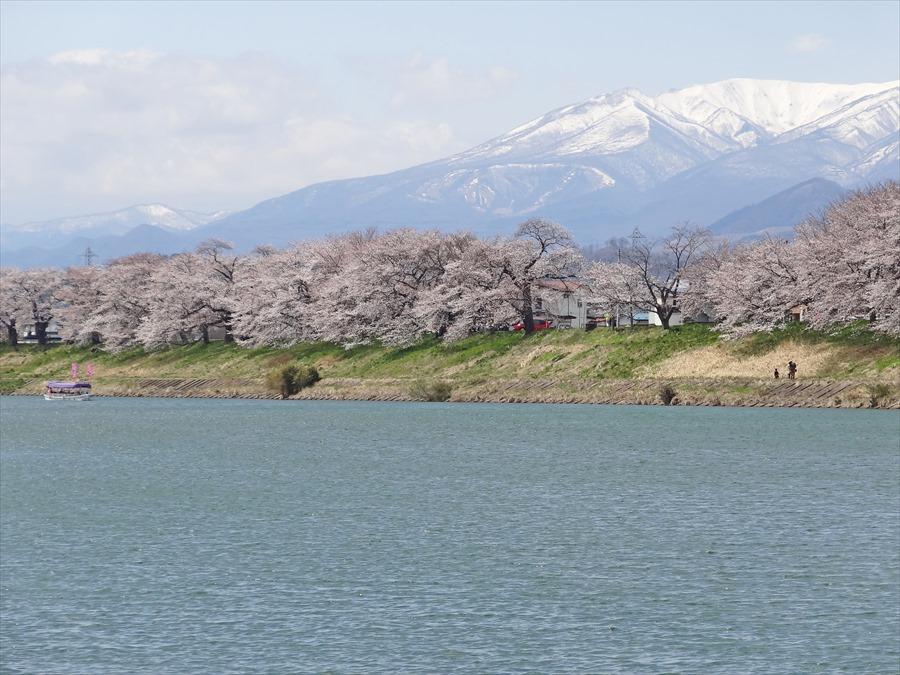 白石川千本桜その2堰明るく06